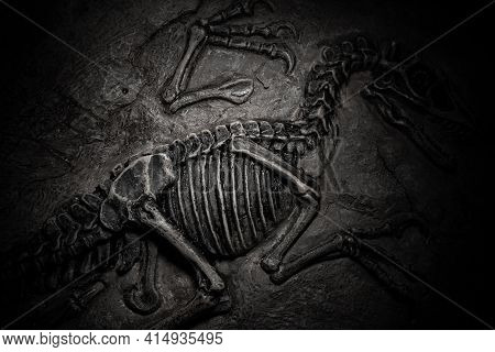 Top View Central Part Of Dinosaur Skeleton Fossil With Details