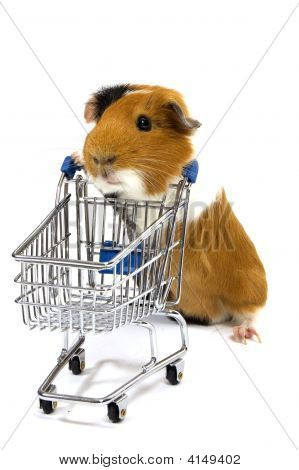 guinea pig is making shopping with a shopping car on white poster