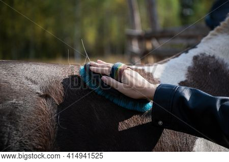 Close-up Shot Of A Hand With A Brush On The Horses Back During Grooming