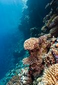 Sunbeams illuminate hard corals on a tropical reef poster