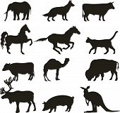 Abstract collection of vector animals on white poster