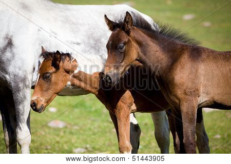 Two foals