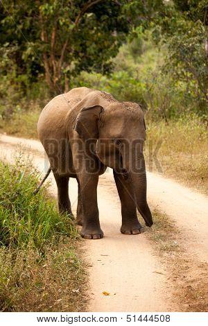 Elephant family in national park in Sri Lanka poster
