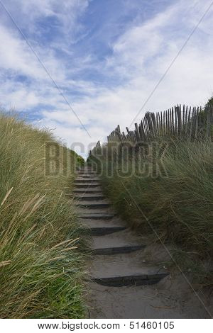 Dunes On The Belgian Coast