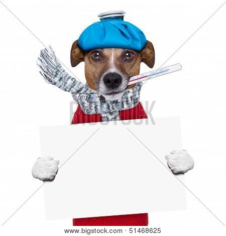 sick dog with fever holding a blank banner poster