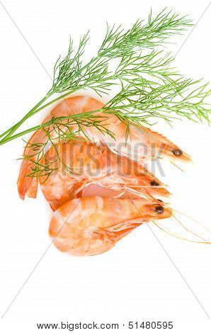 Boiled prawns with dill on white in vertical format poster