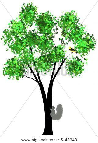 Tree Squirrel Bird Orig