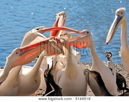 Pelican Competition Is Ridiculous
