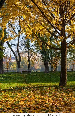 Yellowed Leaves Fell From The Tree On The Green Grass In Autumn Park