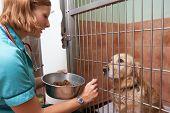 Veterinary Nurse Feeding Dog In Cage poster