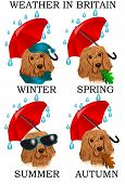 Weather in Britain. Dog under constant rain isolated on white poster