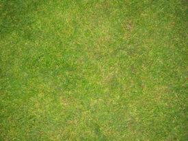 Green Grass Football Pitch Texture In England