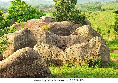Herds Of Stone Elephants