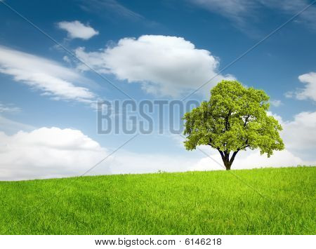 Green Tree In A Field
