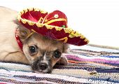 Chihuahua puppy with native Mexican hat and mat on white background poster