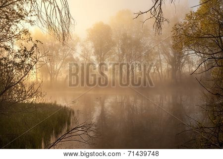 Serene Misty Morning On A Lakeside