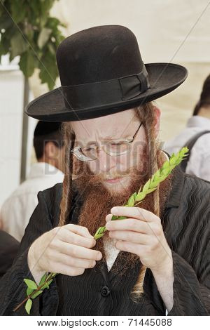 BNEI- BRAK, ISRAEL - SEPTEMBER 17, 2013: Religious Jew in black hat  of carefully selected ritual plants from a traditional market.