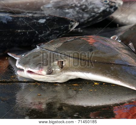 Large Stingray For Sale