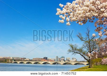 Cherry blossom near Potomac River in Washington DC.