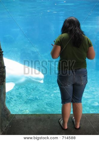 a young woman gazing at a beluga whale poster