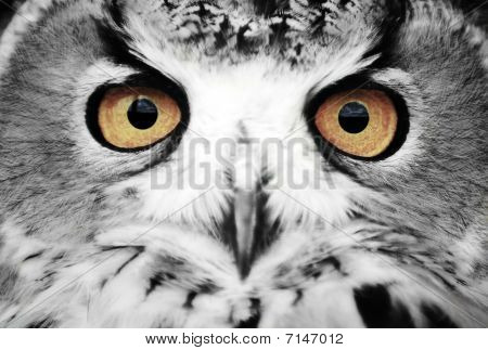 Wise Eyes