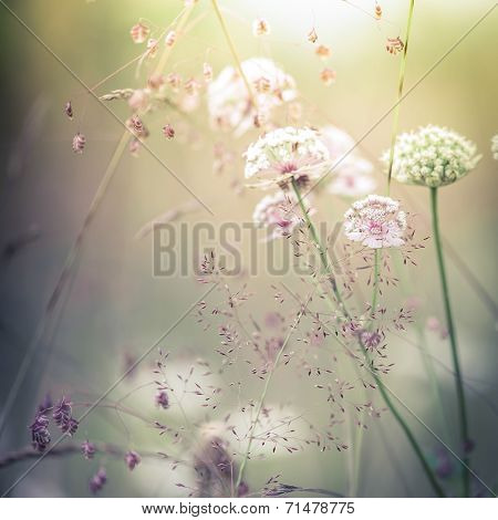 Amazing sunrise at summer meadow with wildflowers. Abstract floral background in vintage style watercolor painting effect and blur poster