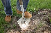 A workman shoveling dirt for landscape repair. poster