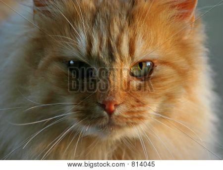 soft cat portrait