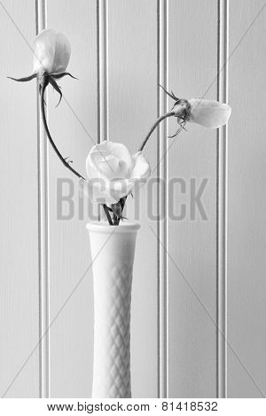 Closeup of white roses in a milky vase against a white beadboard background. Vertical format in Black and White.