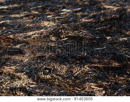Arson Dry Grass
