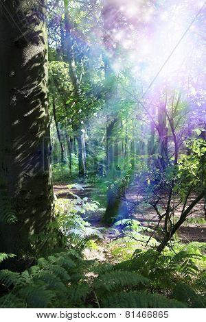 Supernatural Woodland Energy