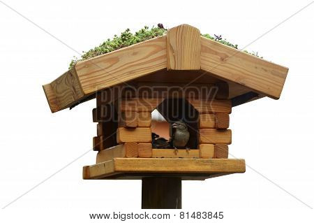 Sparrow bird feeders