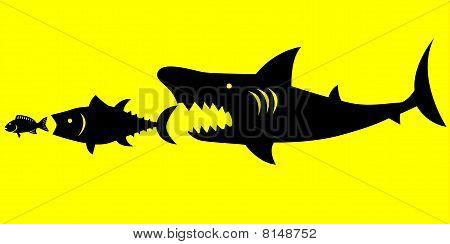 Big fish prey on smaller fish