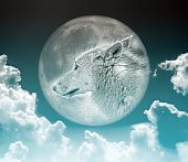 An image of a nice wolf in the moon poster