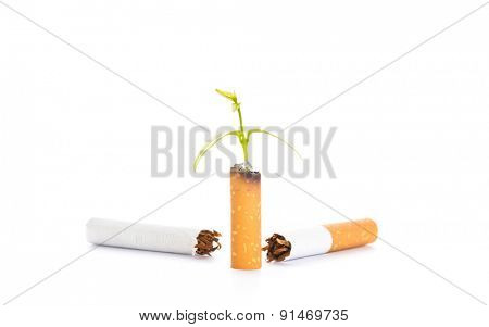 World No Tobacco Day : Cigarette and green newborn plant isolated on white background