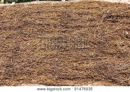 Tobacco Leaves Were Dried Natural