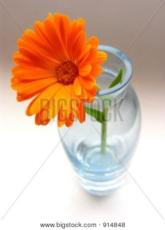 Gerber And Vase