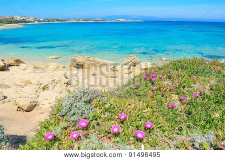 Capo Testa Shoreline With Flowers And Plants