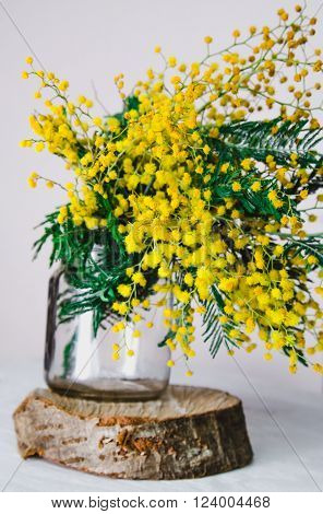 Home decor, Brunch of beautiful mimosa yellow spring flowers in glass on wood, white wall background