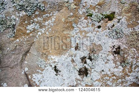 Old stone surface with lichen. Close up. ** Note: Soft Focus at 100%, best at smaller sizes