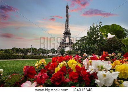 Flowers and Eifel Tower. Spring in Paris.