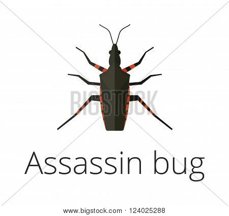 Assassin bug insect vector illustration. Close Up of a poisonous kissing bug also called an assassin bug spread of Chagas disease. Assassin bug insect vector. Assassin bug insect flat illustration.