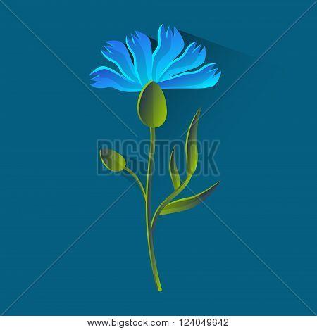Cornflower Isolated, Bluet Over Blue Background Flat Vector Illustration