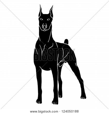 Doberman dog isolated realistic vector illustration black silhouette  pet