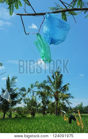 Plastic bags are recycled for use as bird-scarers over a ripening rice field in Ubud Bali Indonesia.