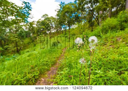 Pathway On Sub Alpine Mountain With Green Grass