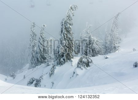 Inclined icy snowy fir trees on winter morning hill and chairs of ski lift in fog.