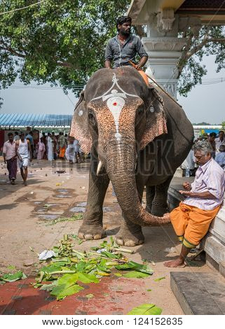 Trichy India - October 15 2013: Amma Mandapam sanctuary along Cauvery River. Mahout sits on his temple elephant waiting for devotees to be blessed by elephant symbolizing Lord Ganesha.