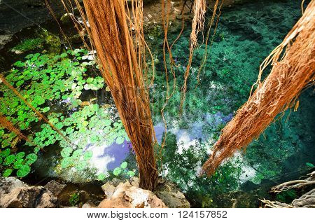 Aerial view to turquoise water lagoon in X-Batun cenote with lianas and tree roots
