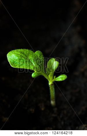 Preparing for the cultivation of plants in the garden. Green sprout. Spring came. Breeding ground ** Note: Shallow depth of field